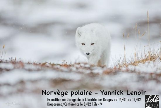 Conférence/Diaporama de Yannick Lenoir - La toundra